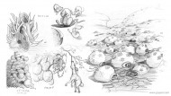 Study of plants and vegetation